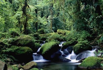 I parchi naturali più belli del mondoBRAULIO-CARRILLO.parco.nazionale.costa.rica