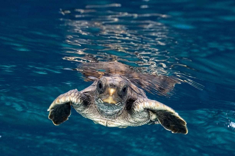 Salviamo le tartarughe in costa rica costa rica new travel for Temperatura tartarughe