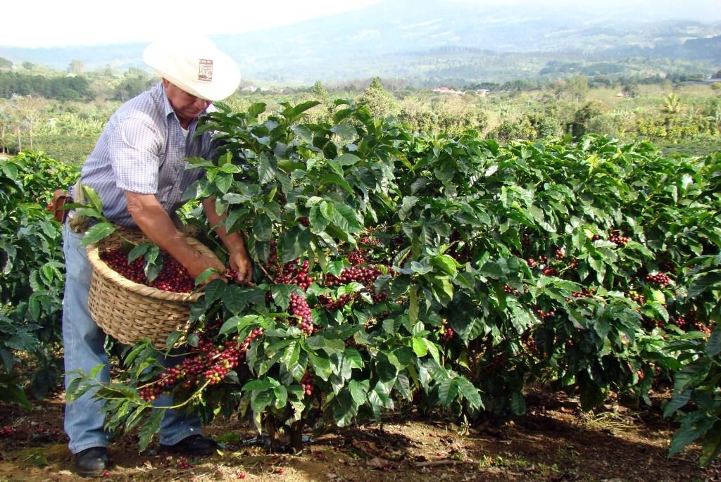 Tour del caff costa rica vacanza 2015 for Progetti di piantagione