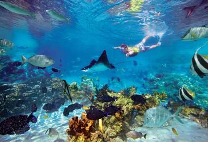 barriera-corallina-costa-rica-snorkeling