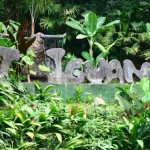 Lost Iguana Resort (2)
