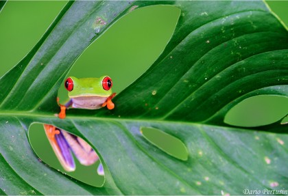 10 curiosita-sulla-costa-ricajpg