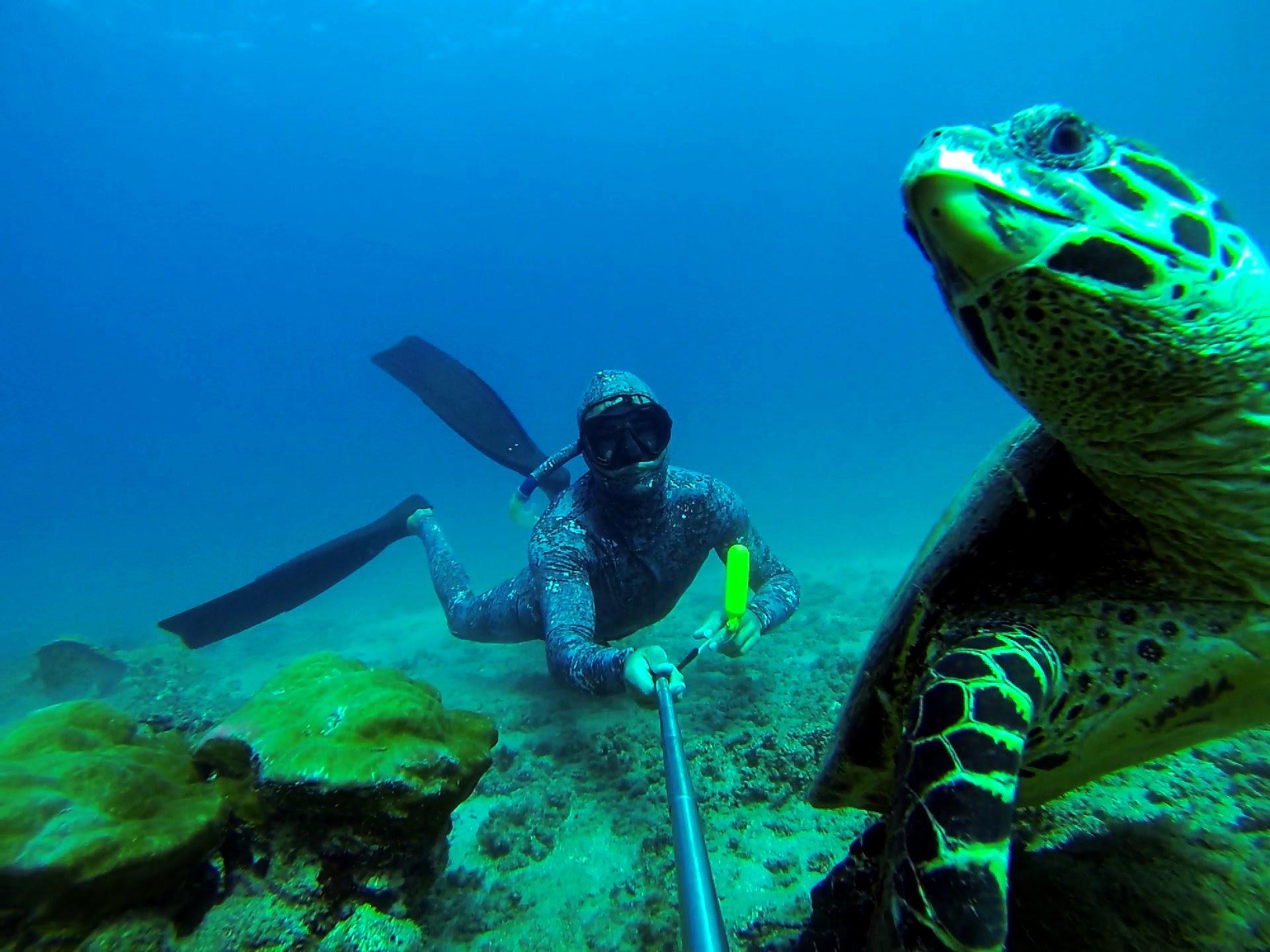 Isla-del-Caño-tartaruga