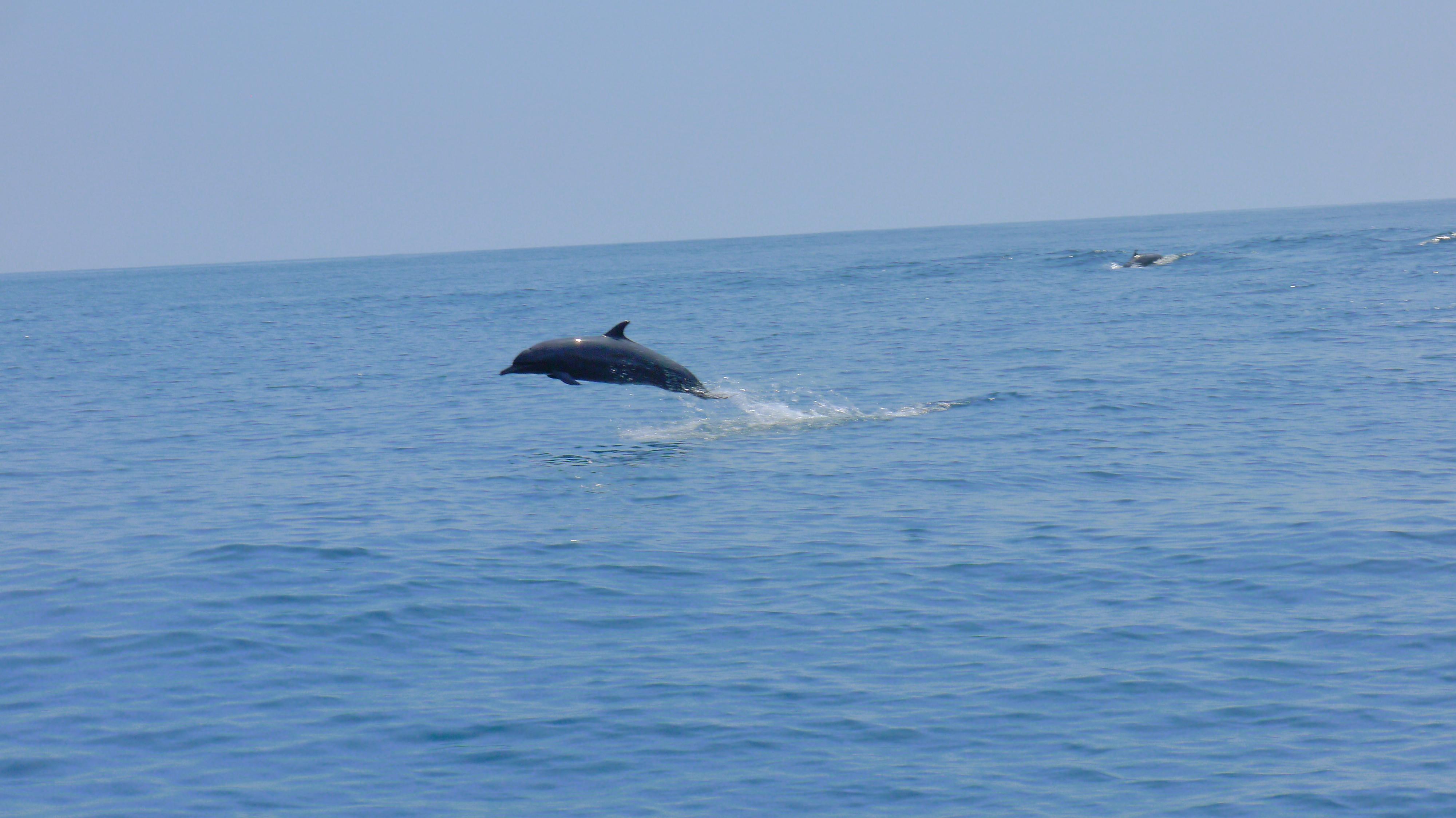 Parco-Nazionale-Isla-del-Caño-delfino