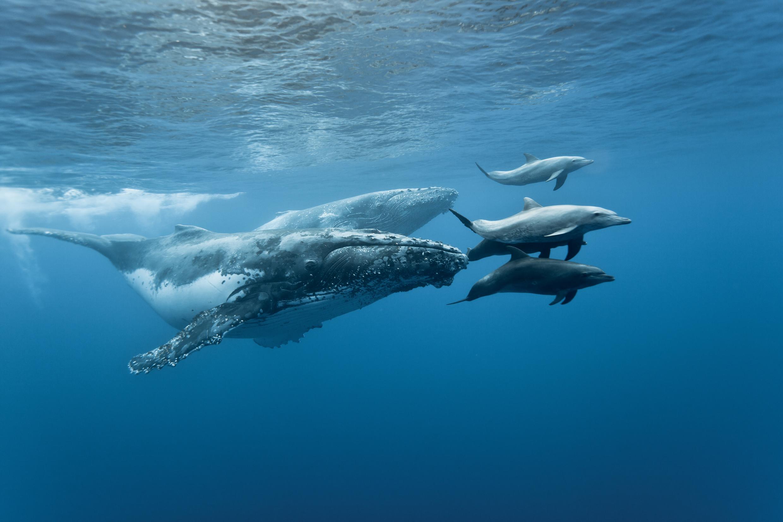 balene-Riserva-Biologica-Isla-del-Caño