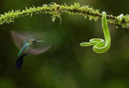 Serpenti della Costa Rica