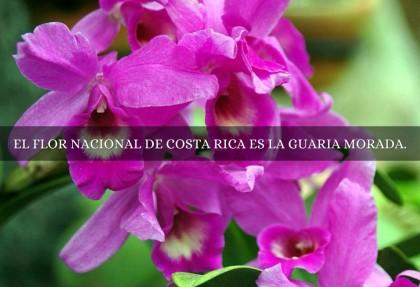 Petaloso come aggettivo per la Costa Rica