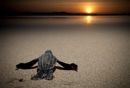 Sviluppo e conservazione delle ricchezze naturali