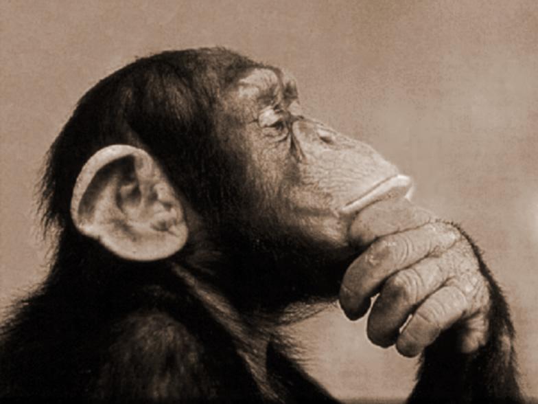 si-vive-con-500-euro-scimpanze-dubbioso