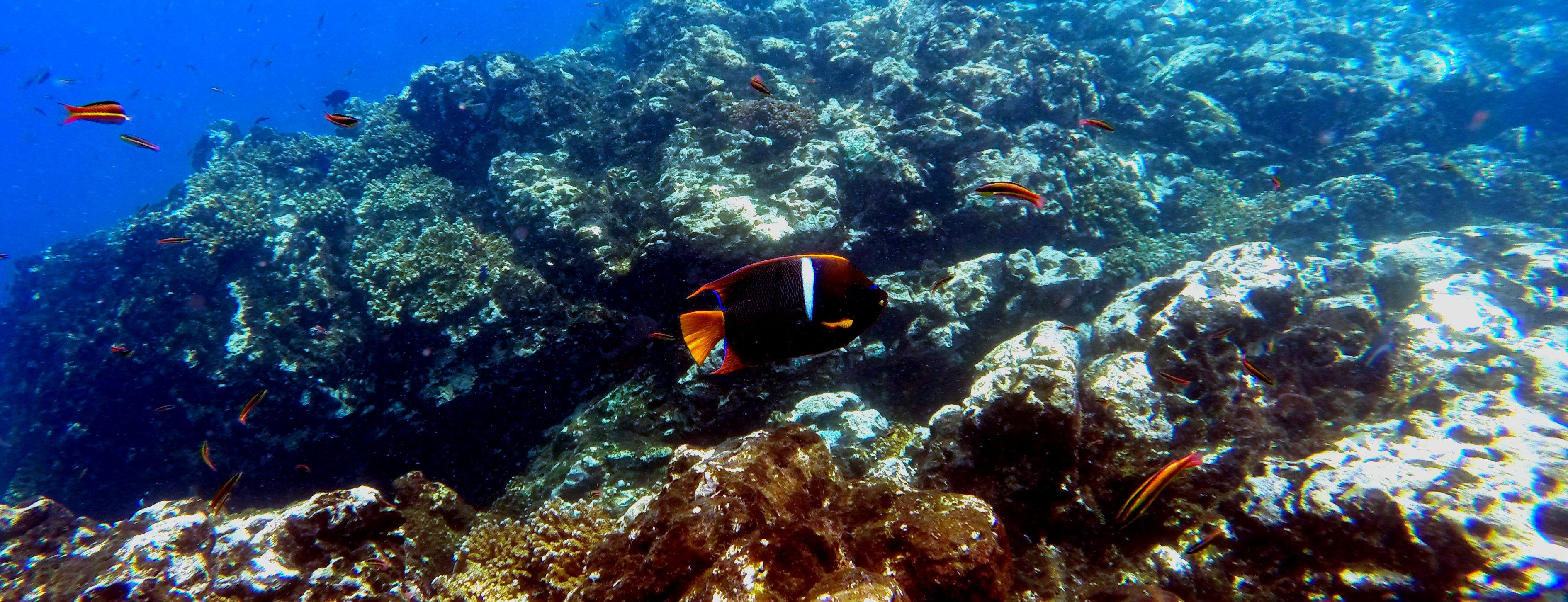 Parco-Nazionale-Isla-del-Caño-corallo