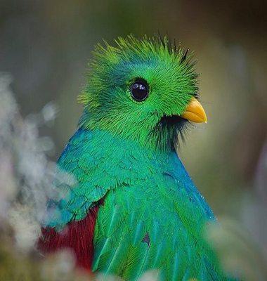 Quetzal1-2